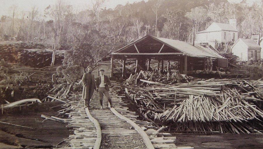 NZ Tree care's founding fathers. Stewart Island, NZ.
