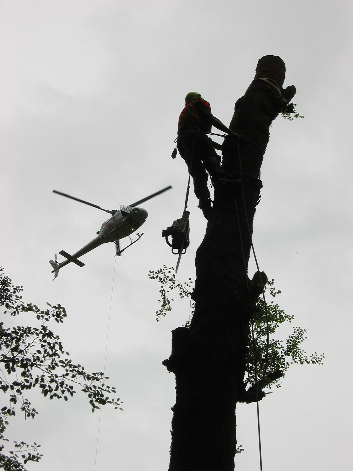 Helicopter-tree-removal
