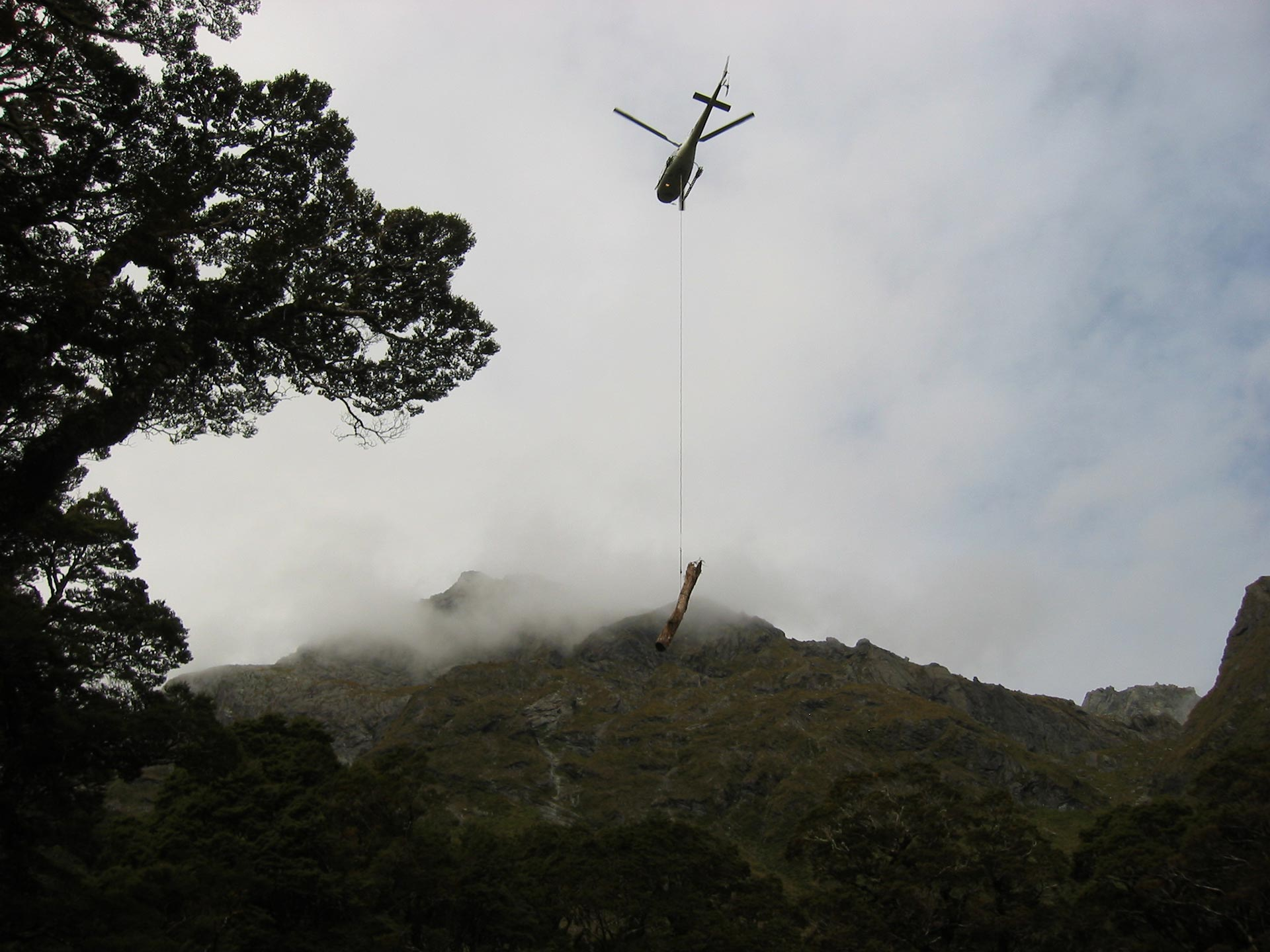 Tree removal - Lake McKenzie, Routeburn Track, Fiordland, New Zealand